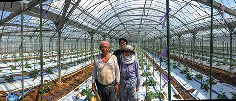 Makoto Koike (คนกลาง) และคุณพ่อคุณแม่ที่ฟาร์มแตงกวาของทางบ้านในประเทศญี่ปุ่น (ที่มาของภาพ: https://cloud.google.com/blog/big-data/2016/08/how-a-japanese-cucumber-farmer-is-using-deep-learning-and-tensorflow)