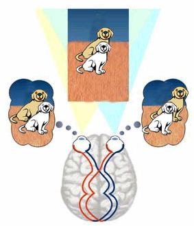 รูปภาพที่ 3 : หลักการมองเห็นของคนซึ่งเป็นที่มาของเทคนิค Stereoscopic vision